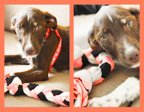 7 cool things to do with old t shirts the bluecotton blog for T shirt dog toy